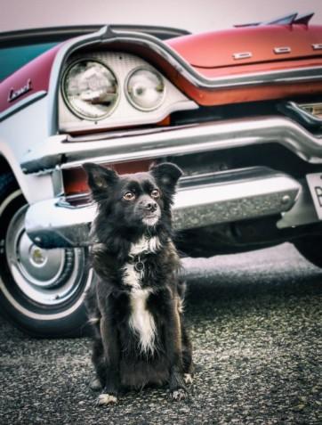 Tikka Vandoggo Vancouver Dog dodge 1957