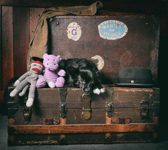 Tikka Vandoggo Vancouver Dog vintage suitcases