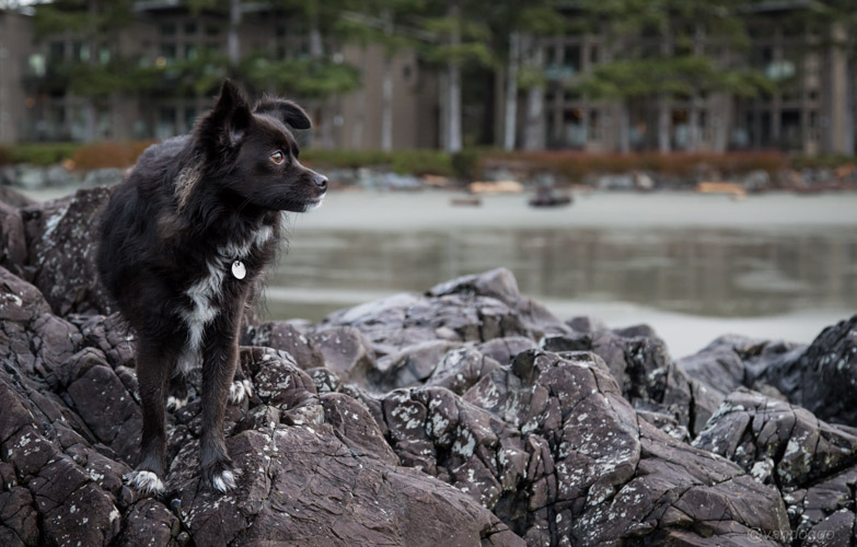 Dog on rocks at the beach