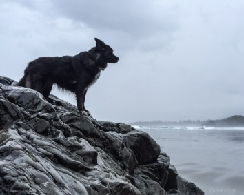 Tikka looking at Sunset Point at Cox Bay Tofino