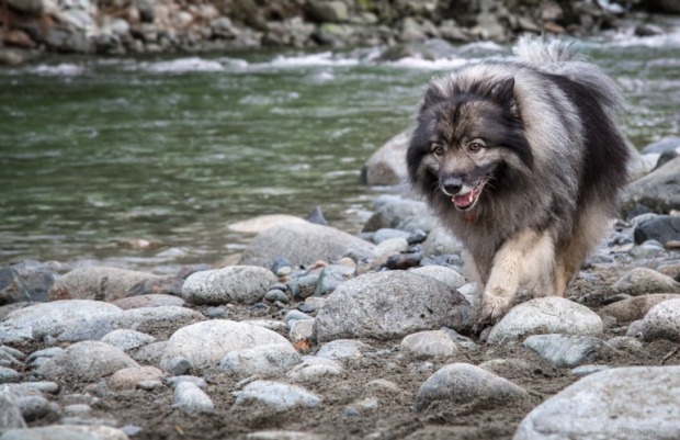 Vandoggo-Dog-Tikka--2