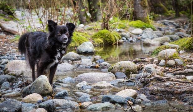Vandoggo-Dog-Tikka--3
