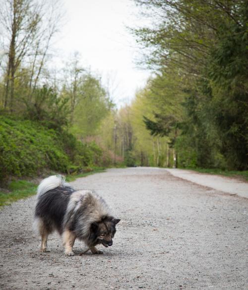 Vandoggo-Dog-Tikka--5