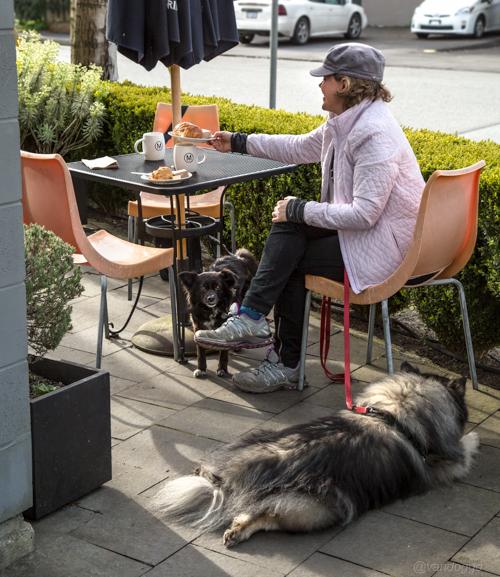 Vandoggo-Dog-Tikka--9
