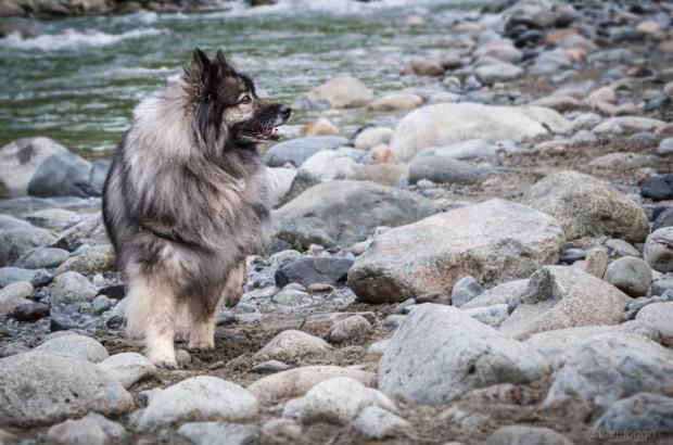 Vandoggo-Dog-Tikka-