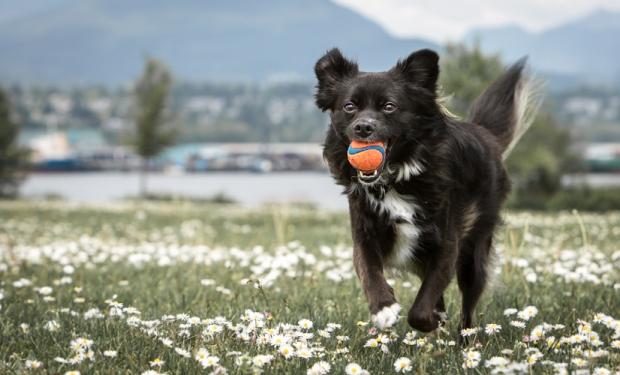 VanDoggo Vancouver Dog Tikka DogPark 03-