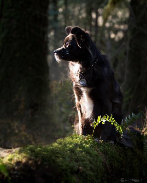 VanDoggo Vancouver Dog Tikka Forest 01-