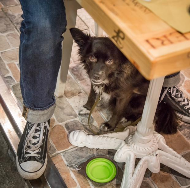 Tikka Vandoggo Dog Florence -13.jpg