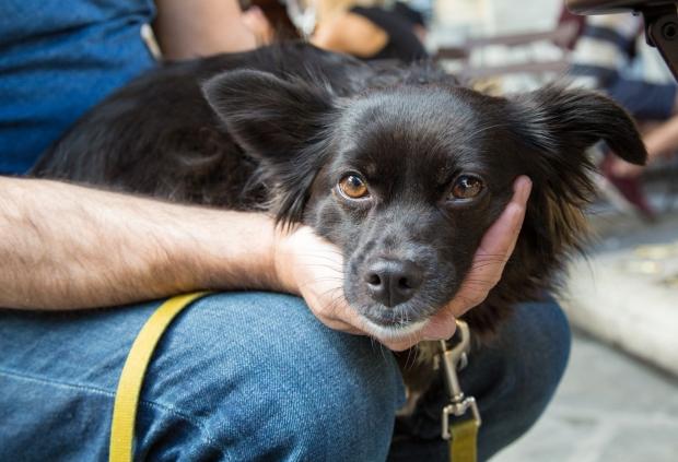 Tikka Vandoggo Dog Florence -17.jpg