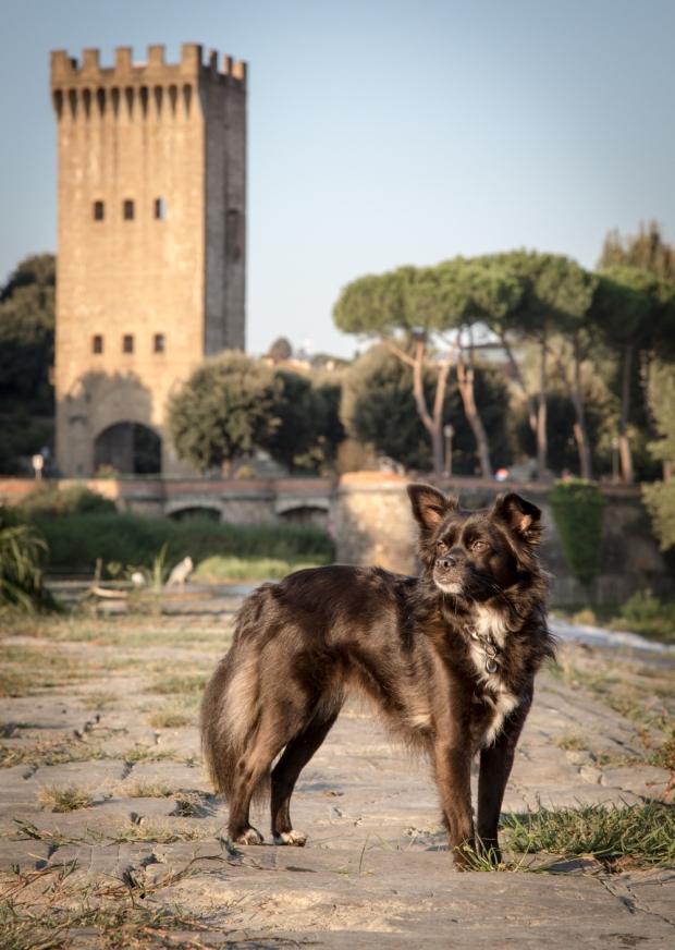 Tikka Vandoggo Dog Florence -22.jpg