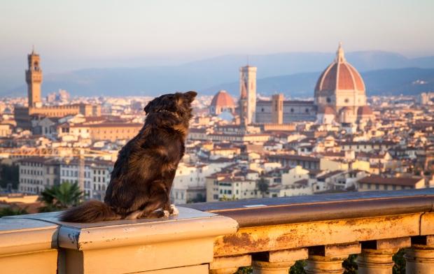 Tikka Vandoggo Dog Florence -4.jpg