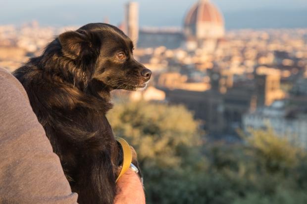Tikka Vandoggo Dog Florence -6.jpg
