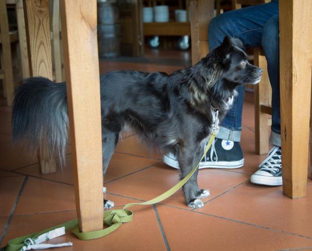 tikka-vandoggo-dog-travel-tuscany-passeggere-1