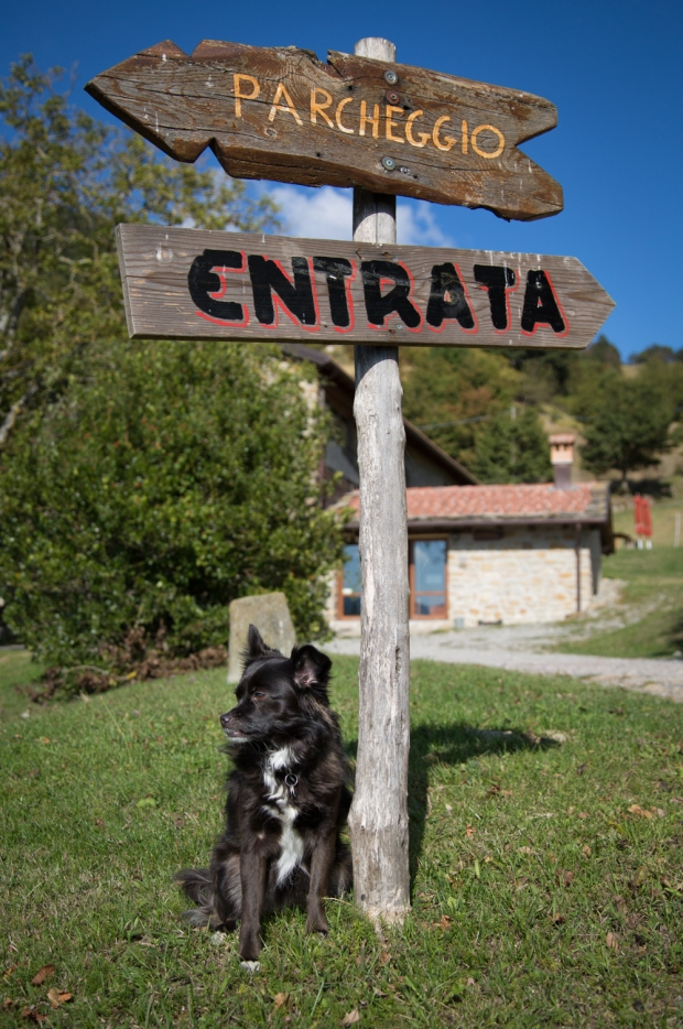 tikka-vandoggo-dog-travel-tuscany-passeggere-3