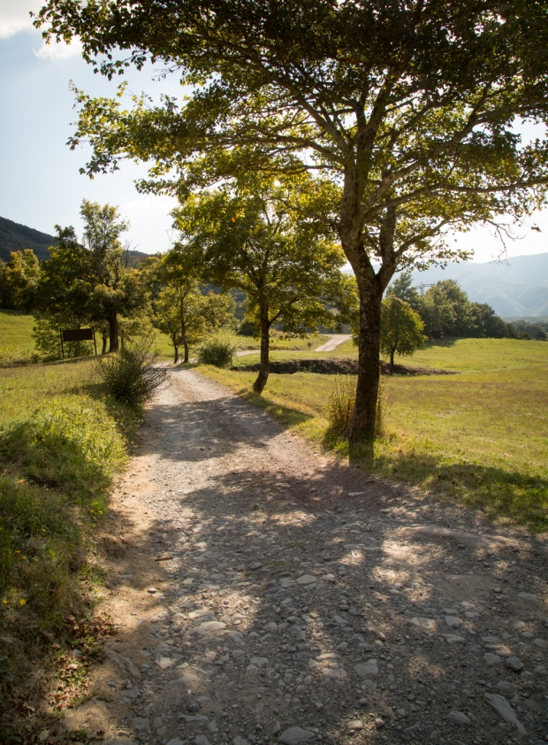 tikka-vandoggo-dog-travel-tuscany-passeggere-4