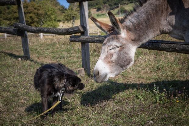 tikka-vandoggo-dog-travel-tuscany-passeggere-5