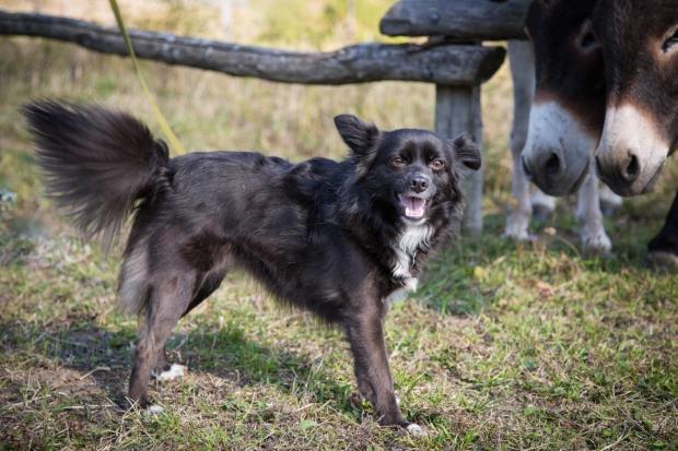 tikka-vandoggo-dog-travel-tuscany-passeggere-6