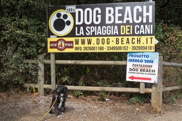 VanDoggo Tikka Italy Dog Beach-1.JPG