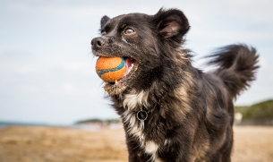 vandoggo-tikka-italy-dog-beach-11