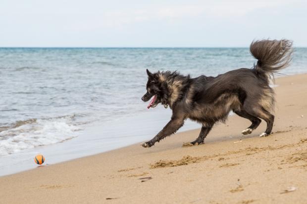 VanDoggo Tikka Italy Dog Beach-13.JPG
