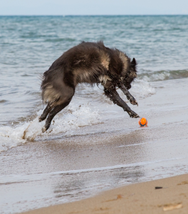 VanDoggo Tikka Italy Dog Beach-15.JPG