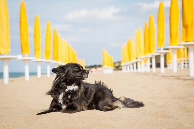 VanDoggo Tikka Italy Dog Beach-8.JPG