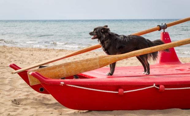 VanDoggo Tikka Italy Dog Beach-9.JPG