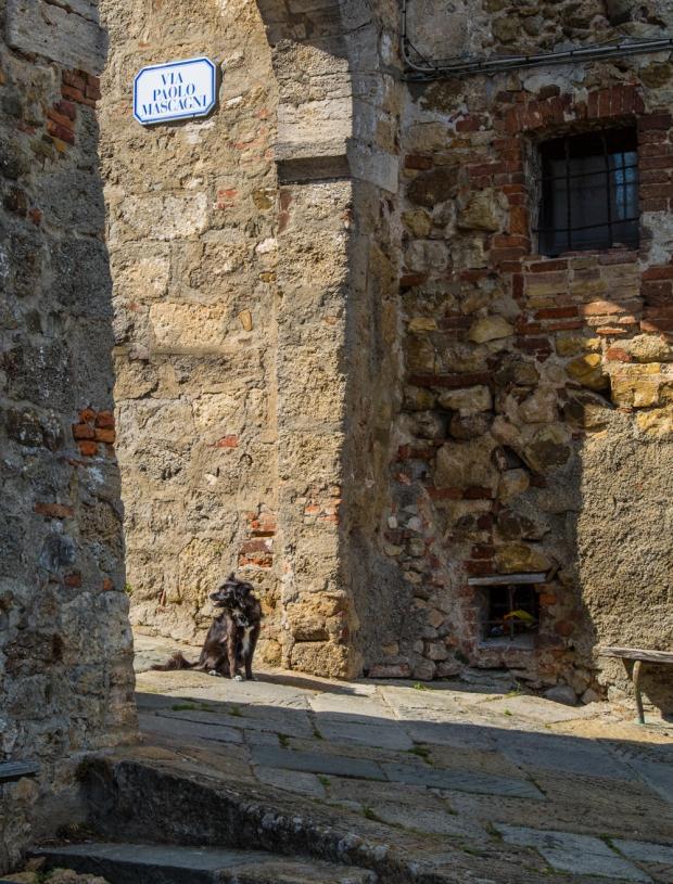 VanDoggo Tikka Dog Chiusdino-3.JPG