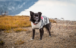 vandoggo-tikka-dog-salmon-arm-sweaterfeature-1