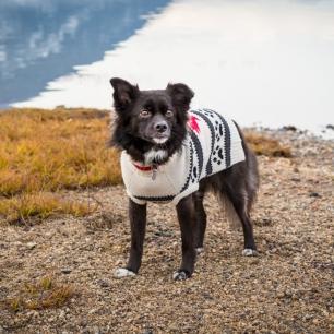 vandoggo-tikka-dog-salmon-arm-sweaterfeature-1