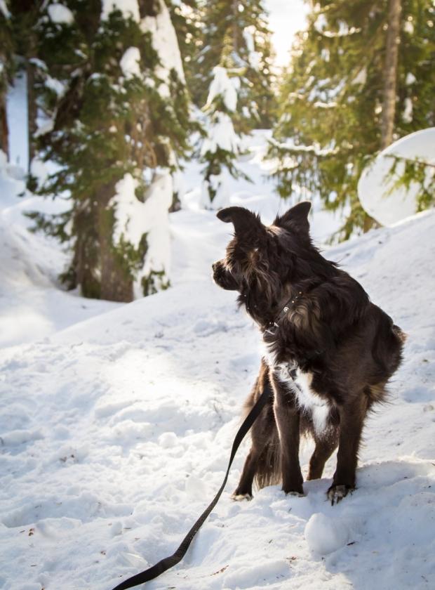 vandoggo-dog-tikka-snow
