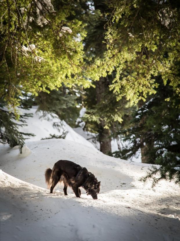 vandoggo-dog-tikka-snow1
