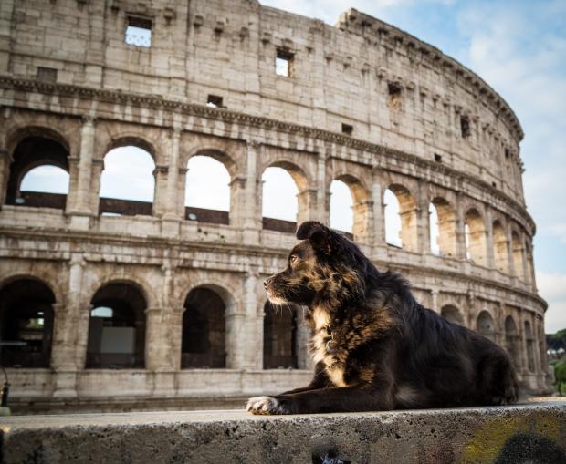 VanDoggo Tikka Dog Italy Rome-6.JPG