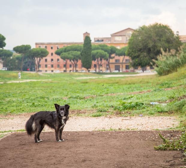 VanDoggo Tikka Dog Italy Rome-7.JPG