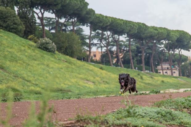 VanDoggo Tikka Dog Italy Rome-8.JPG