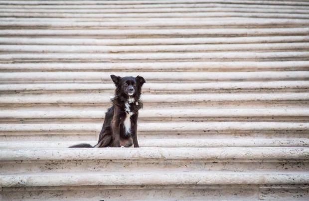 VanDoggo Tikka Dog Italy Rome Spanish Steps.JPG