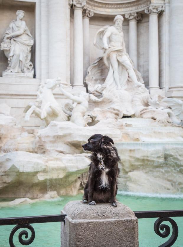 VanDoggo Tikka Dog Italy Rome Trevi.JPG