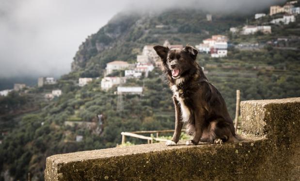 VanDoggo Italy Amalfi Coast RavelloFeature