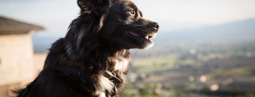 Small black dog in Assisi Umbria Italy