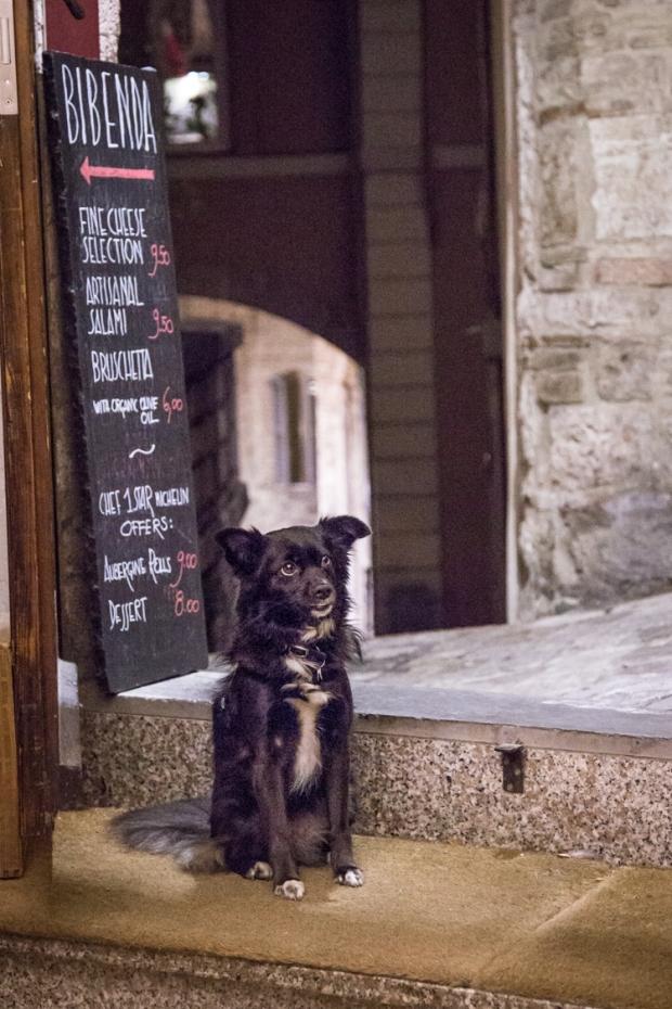 vanDoggo Tikka Italy Assisi-18.JPG