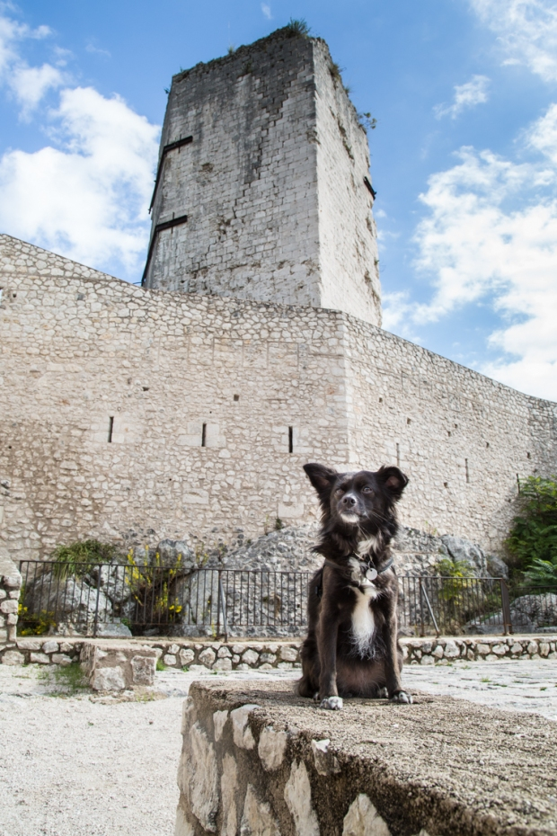 vanDoggo Tikka Italy Assisi-3.JPG