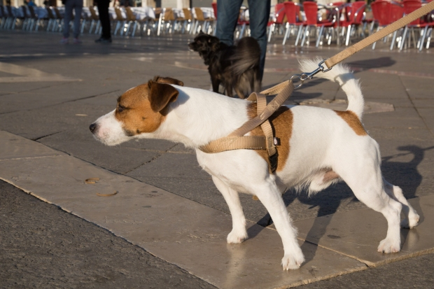 Tikka Venice Dog Travel-23.JPG