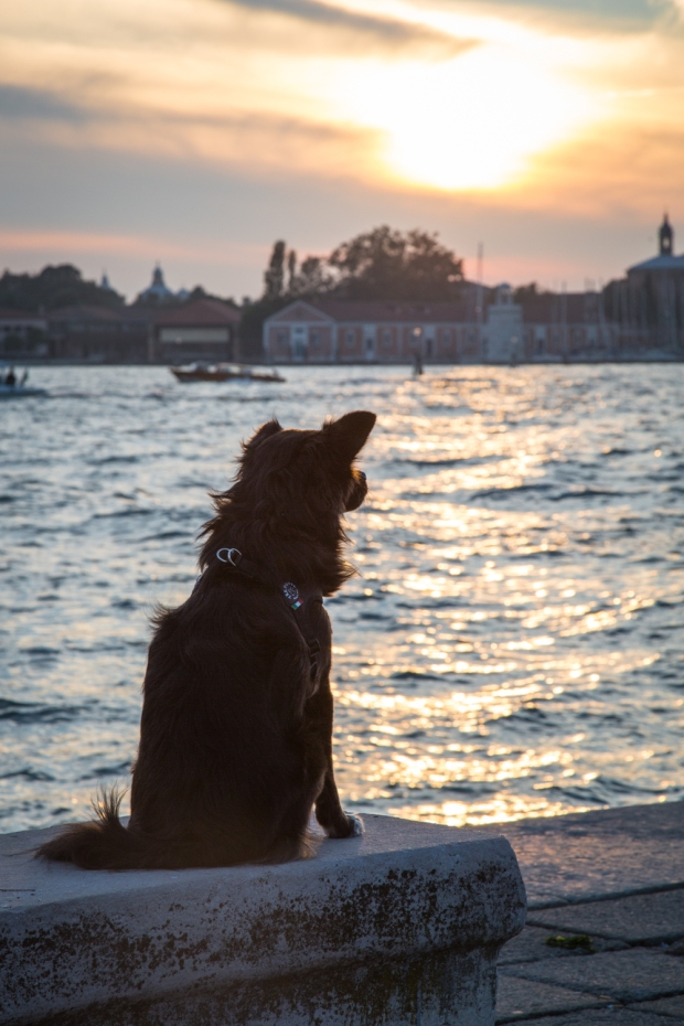 Tikka Venice Dog Travel-36.JPG