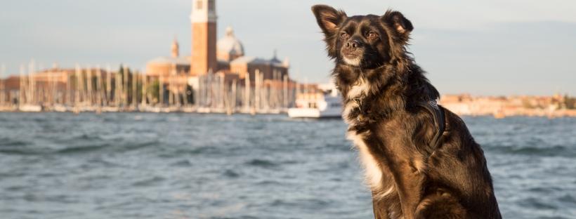 Small dog in Venice infront of Chiesa di San Giorgio Maggiore