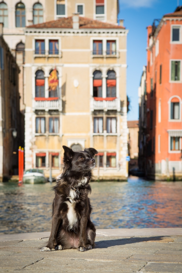 Tikka Venice Dog Travel-14.JPG