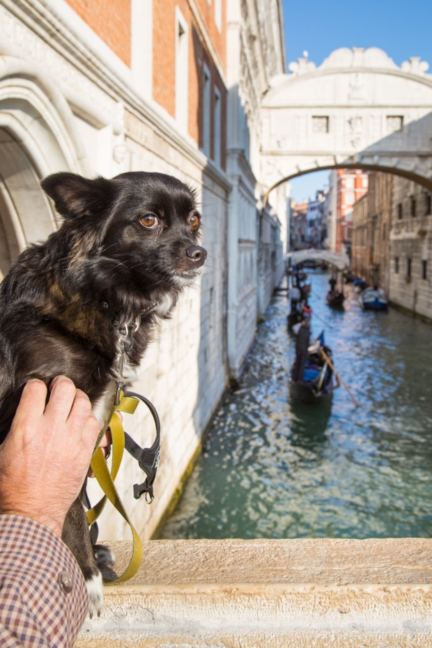 Tikka Venice Dog Travel-28.JPG