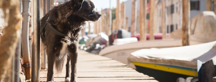 Small dog along the dock beside a canal in Venice, Italy.